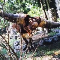 lurch-tree-7