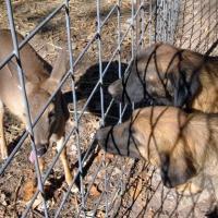 leos-deer11-09-011a