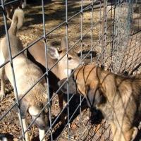 leo-deer11-09-010a