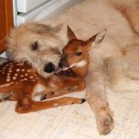 3dog-deer